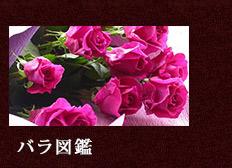 まりかのバラ図鑑