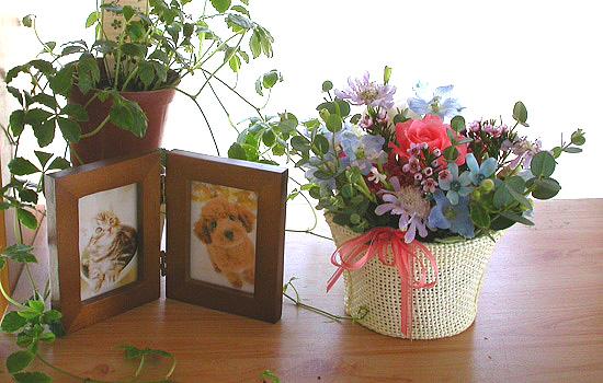 ペットの生花ギフトの花まりか