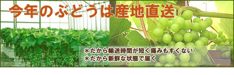 ぶどう鉢植え
