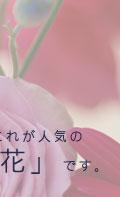 生花フラワーギフトのナチュラルフラワー