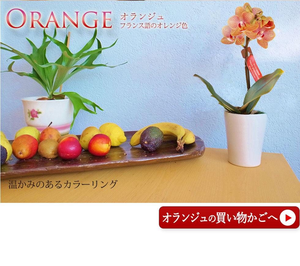花鉢 コチョウラン