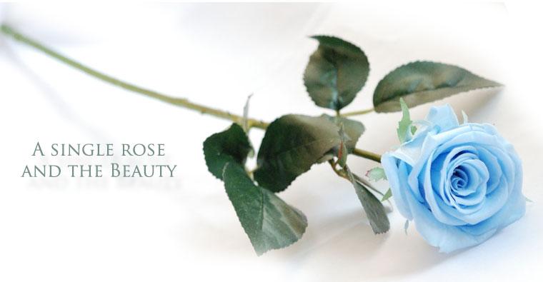 ブリザーブドフラワーのバラ11本の花束
